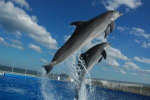 Dolphin-tours